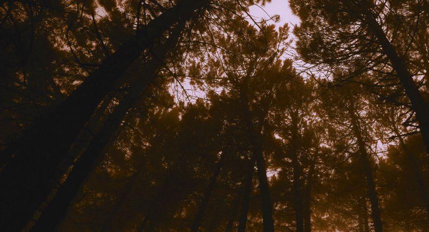 bp halloween forest event