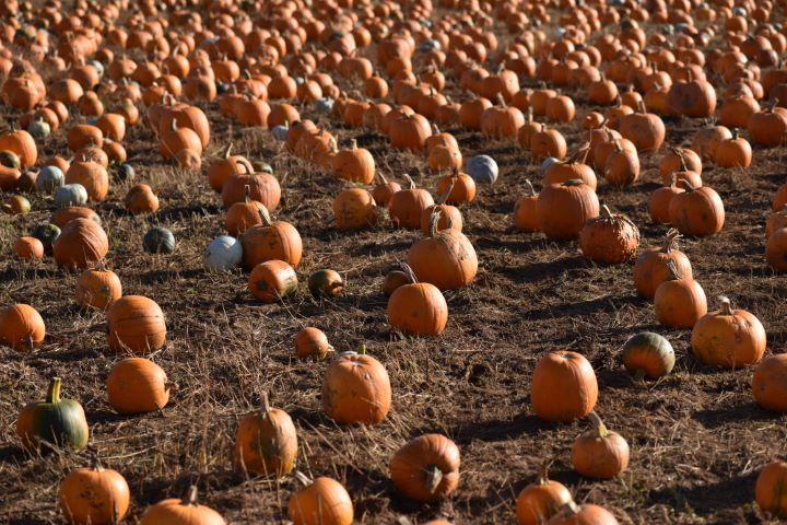 pumpkins event
